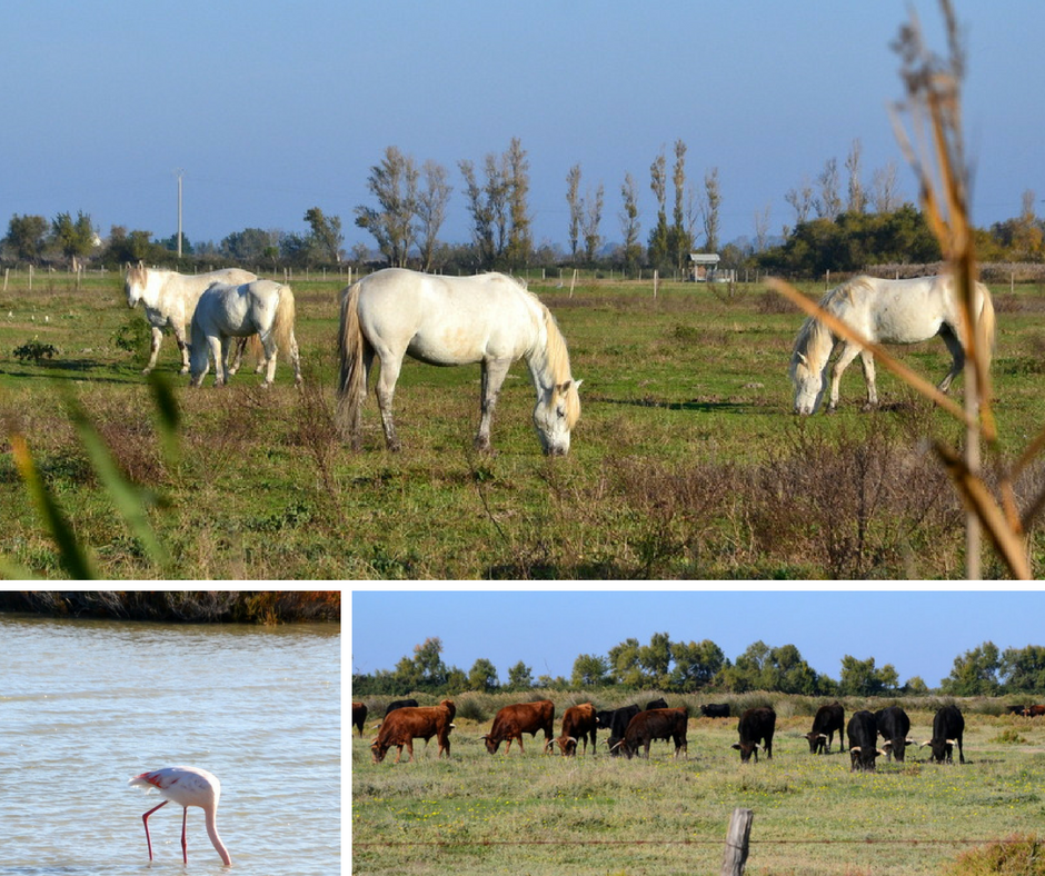 wildtiere-in-der-camargue