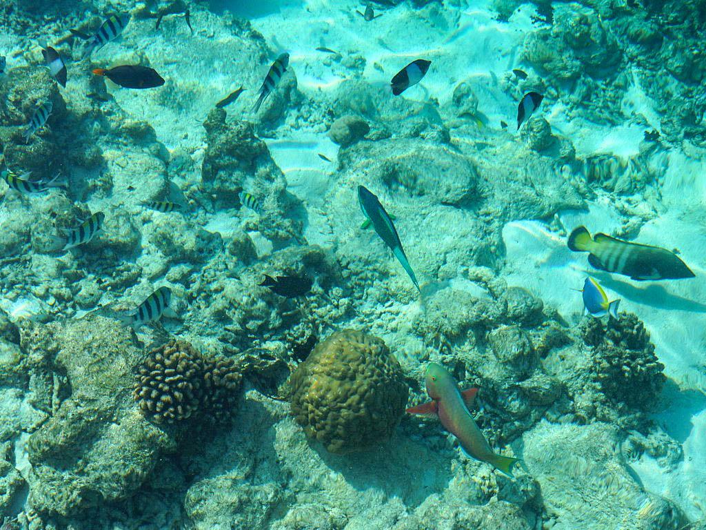 Riff auf den Malediven
