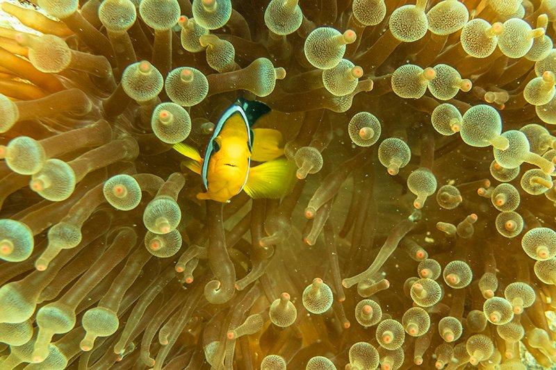 Fische Malediven