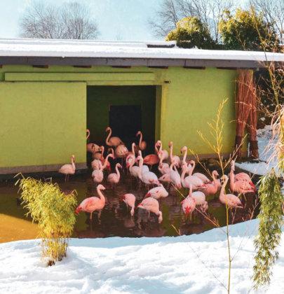 Hellbrunn: Schlosspark und Zoo im Winter