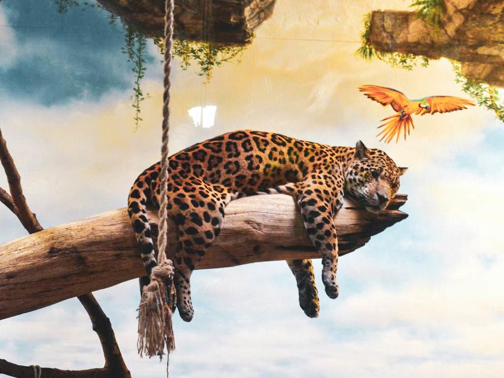 Leopard in Hellbrunn