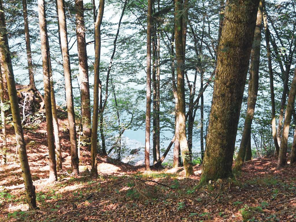 Wald am Schwarzensee