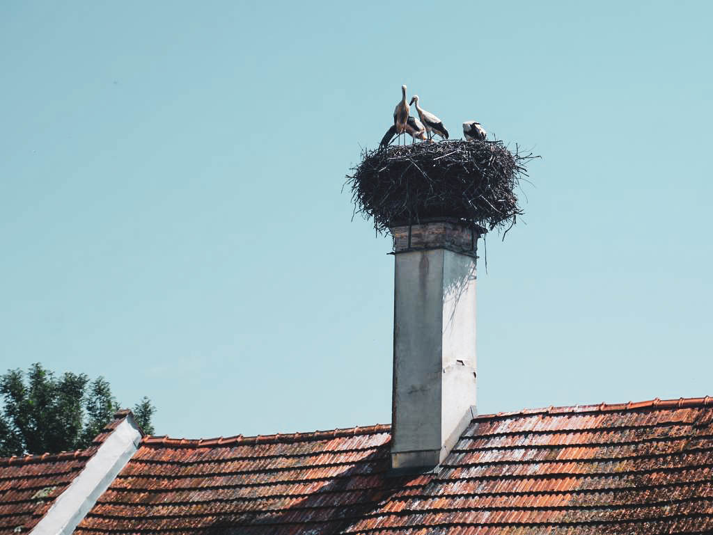Storchennest in Bad Blumau