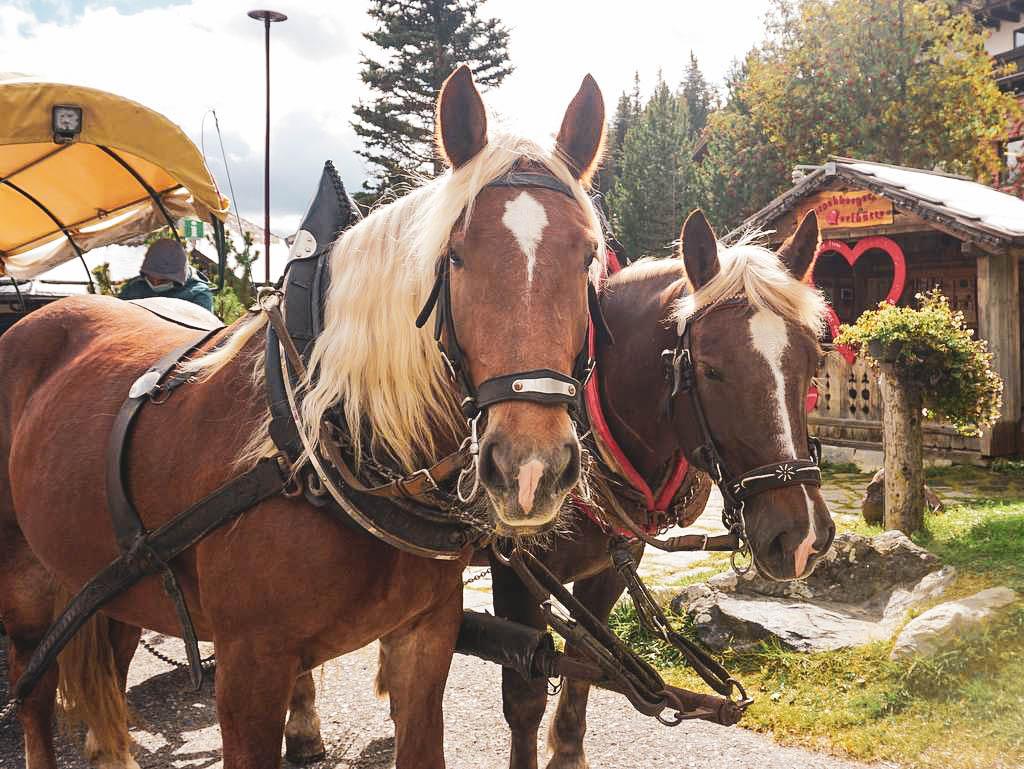 Pferde am Katschberg