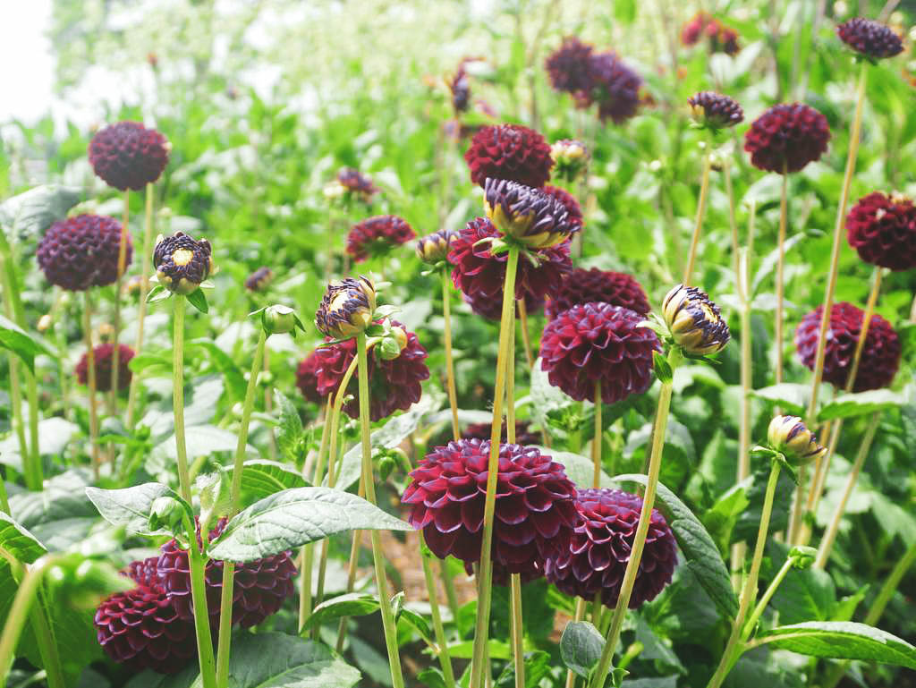 Gartenschau in Lindau Blumen